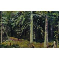 Fir forest 1890 1