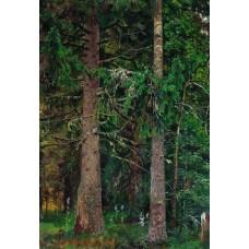Fir forest 1890