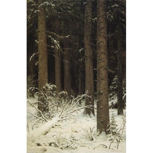 Fir forest in winter 1884