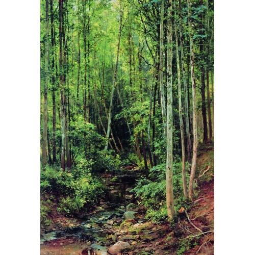 Forest aspen 1896