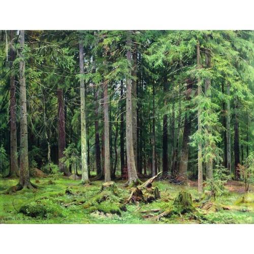 Forest in mordvinovo 1891