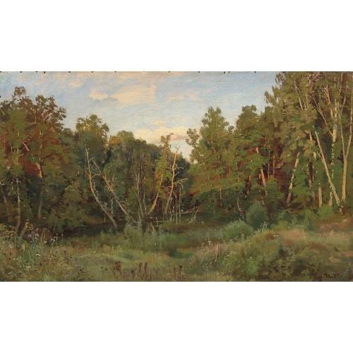 Forest landscape 1