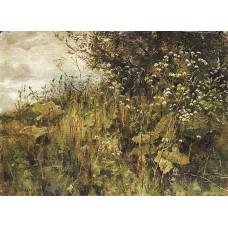 Goutweed grass