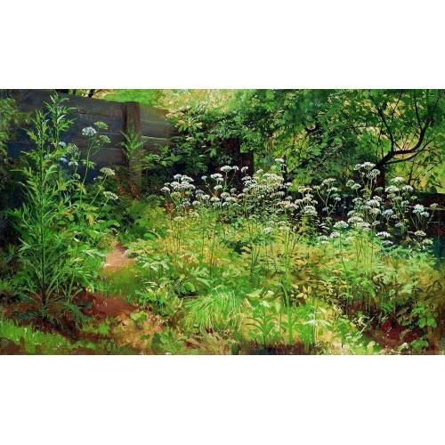 Goutweed grass pargolovo 1885