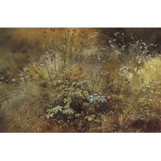 Grass 1892