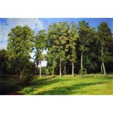 Grove by the pond preobrazhenskoye 1896