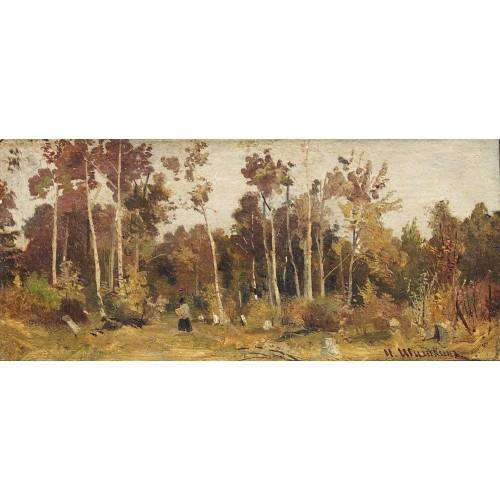 Landscape edge of a wood