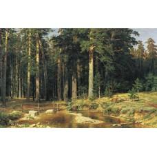 Mast tree grove 1898