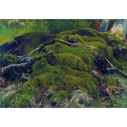 Moss roots