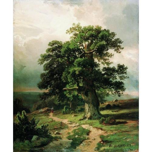 Oak 1865