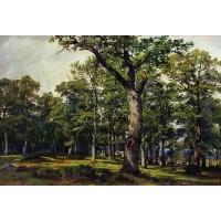 Oak forest 1869