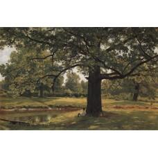 Oaks in old peterhof 1891 1
