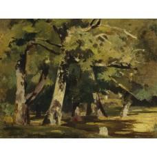 Oaks in sunlight
