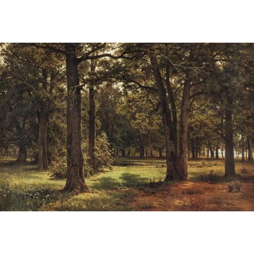 Oaks of peter the great in sestroretsk 1886