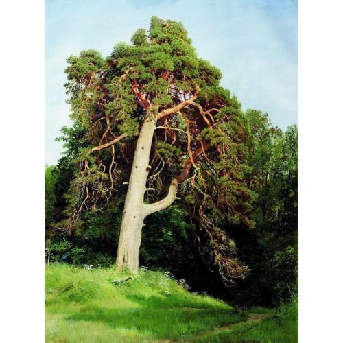 Pine merikyul 1894