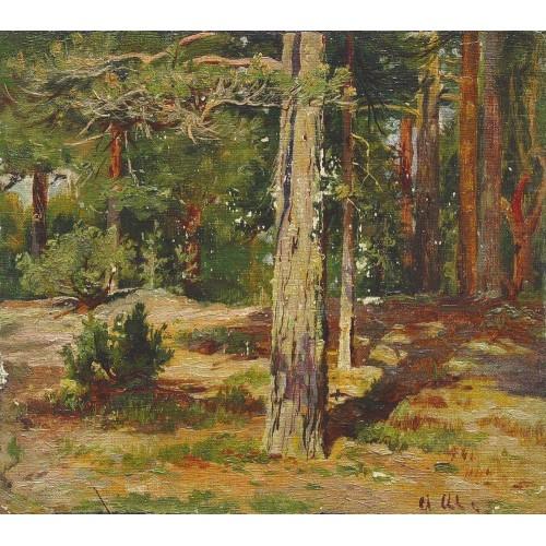Pines summer landscape 1867