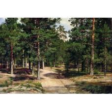 The sestroretsk bor 1896
