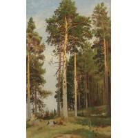The sun lit pines