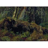 Wind fallen trees 1880