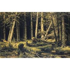 Wind fallen trees 1888