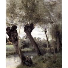 Saint Nicholas les Arras Willows on the Banks of the Scarpe