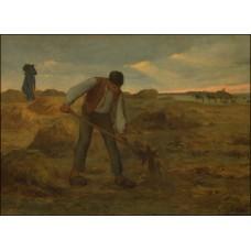 Peasant spreading manure
