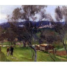 Olive Trees Corfu