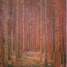 Fir forest i