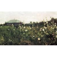 Hollyhocks in the saratov region 1889