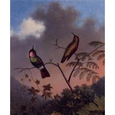 Brazilian Ruby Hummingbirds