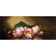 Egyptian Lutus Blossom
