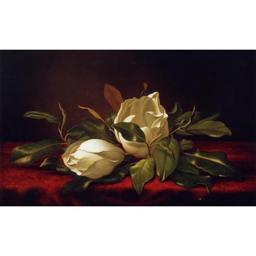 Magnoliae Grandeflorae