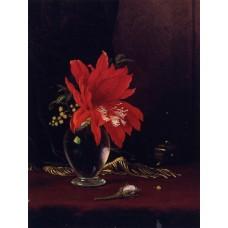 Red Flower in a Vase
