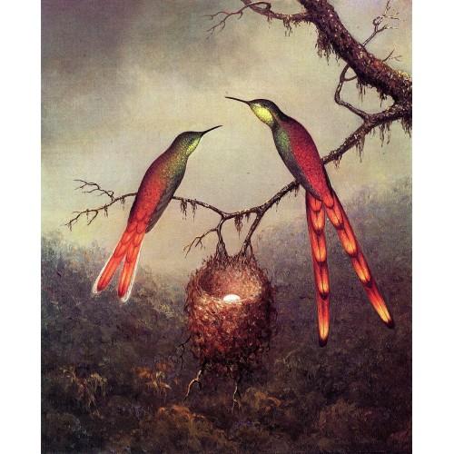 Two Hummingbirds Garding an Egg