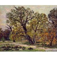 Autumn Fontainebleau Forest