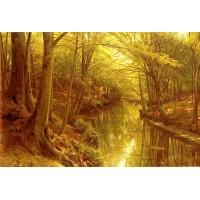 A Woodland Stream