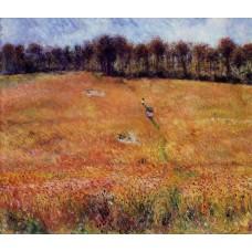 Path through the High Grass