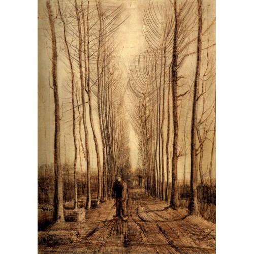 Avenue of poplars