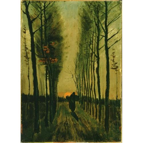 Avenue of poplars at sunset