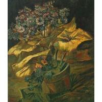 Coneraria in a Flowerpot