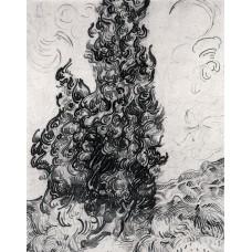 Cypresses 2