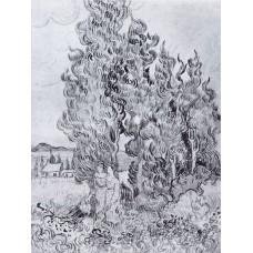 Cypresses 3