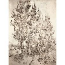 Cypresses 4