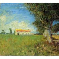 Farmhouses in a Wheat Field