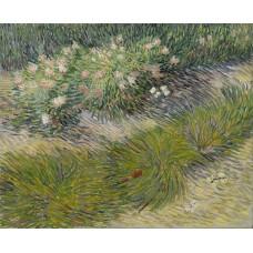 Grass and butterflies
