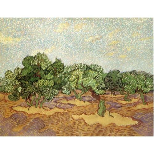 Olive Grove Pale Blue Sky
