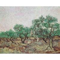 Olive picking 2