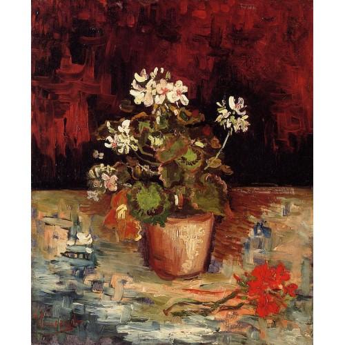 Still Life Geranium in a Flowerpot