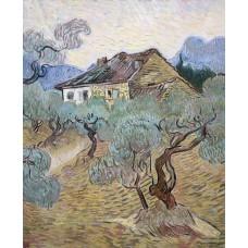 White cottage among olive trees