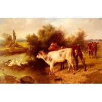 Calves Watering
